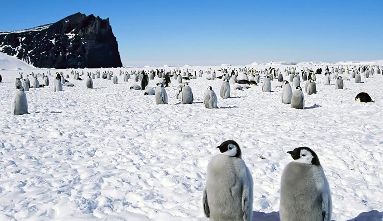 Пингвины на южном полюсе