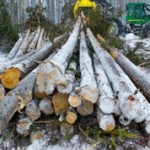 Чем отличается зимний лес от летнего: особенности и отличия