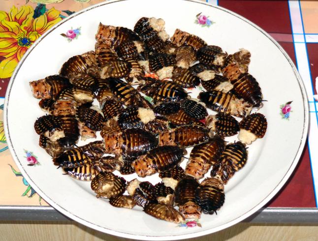Жареные тараканы