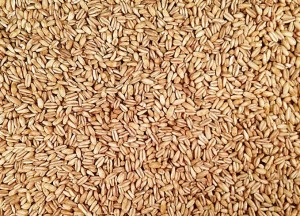 Много пшеничной крупы