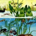 Чем биоценоз отличается от биогеоценоза?