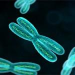 Хромосома и хроматин: что это и чем они отличаются?