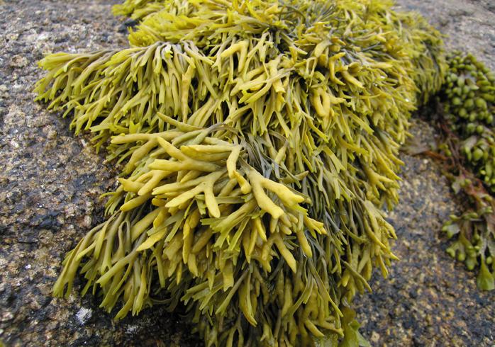 Красивые водоросли