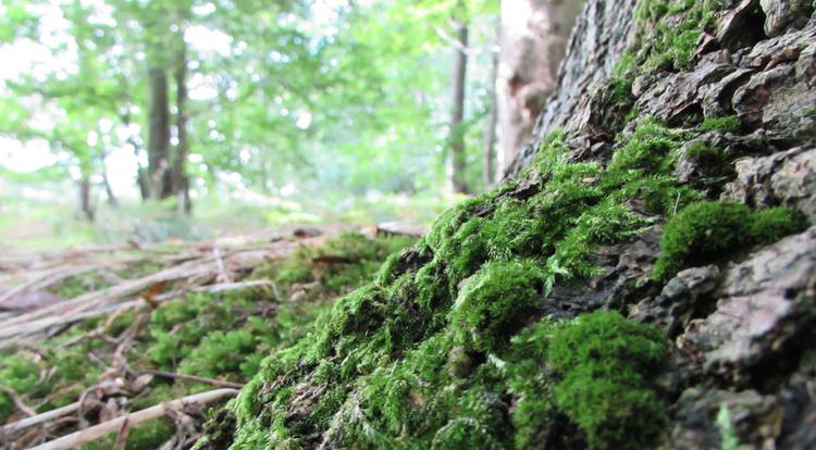 Растущий мох
