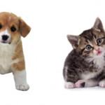 Собака или кошка — что лучше выбрать