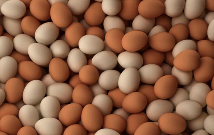 Много куриных яиц
