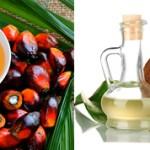 В разница между пальмовым и кокосовым маслом?