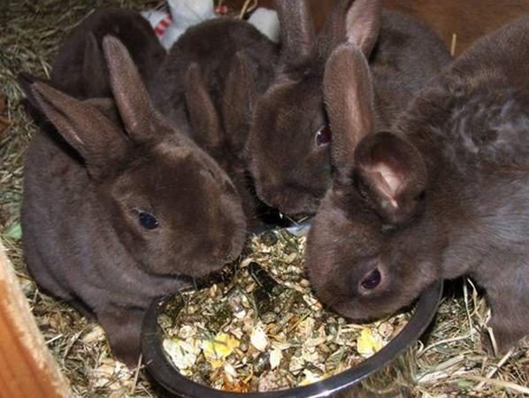 Кролики и комбикорм