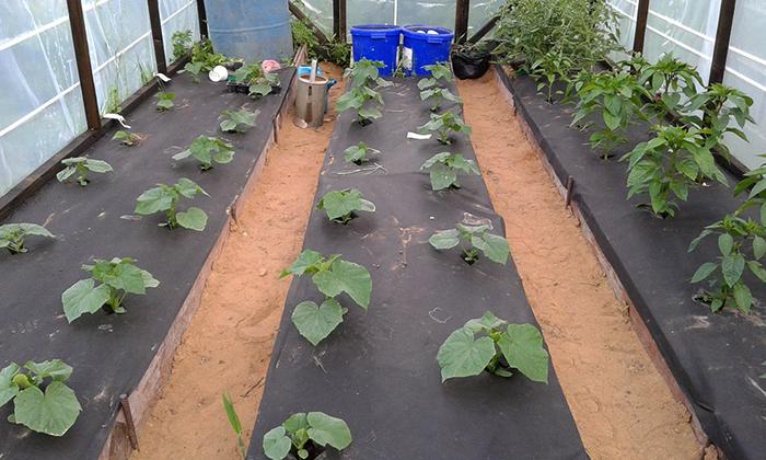 Пленка для растений