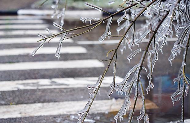 Лед на земле и деревьях