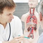 В чем разница между врачами урологом и нефрологом?