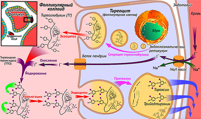 Процесс биосинтеза