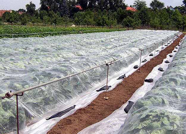 Утепление рассады агроволокном