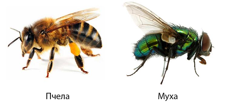 Пчела и муха