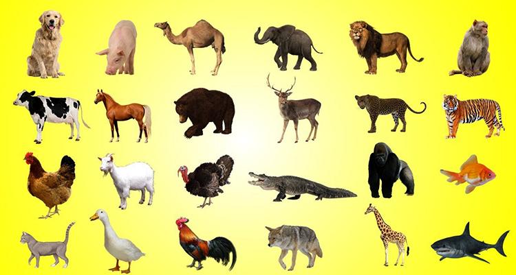 Животные