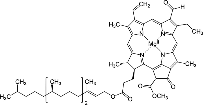 Хлорофилл B