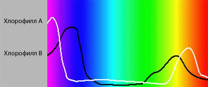 Сравнение спектров поглощения